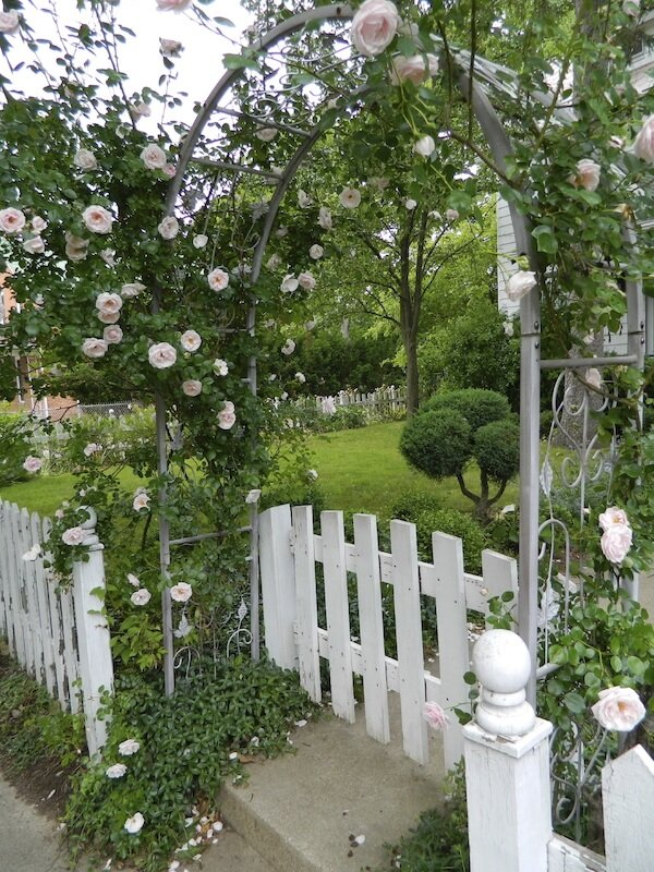 This is a unique patched together ensemble of a picket fence, a wooden gate, and an iron arbor trailed with climbing roses.