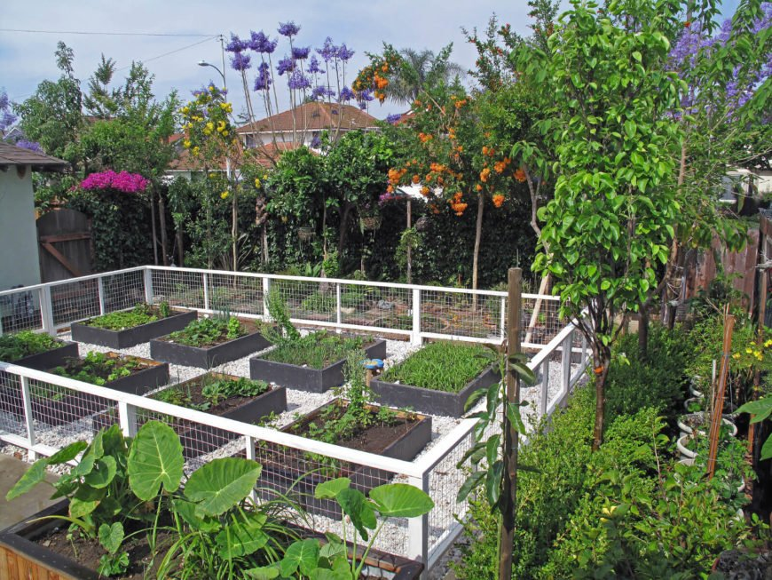 In this picture, you can see eight darkly painted raised garden beds. When you have wooden raised garden beds, you can paint them any color you would like.