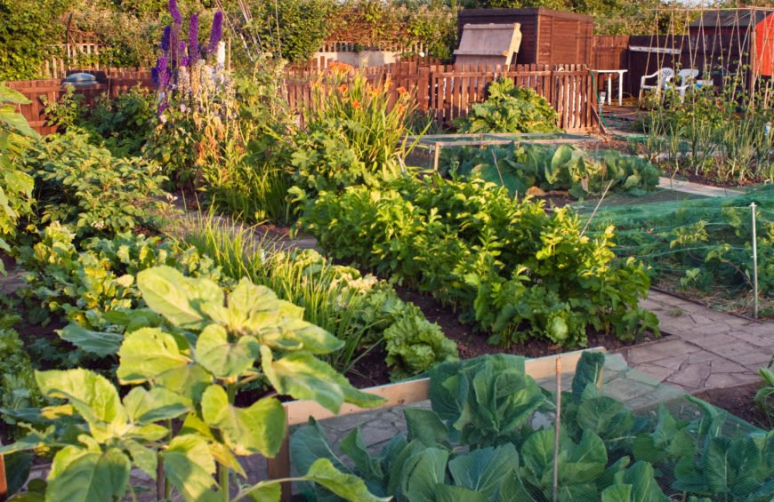 This is an ample garden filled with lush and healthy vegetables. A stone walkway can give a garden a finished and professional look.