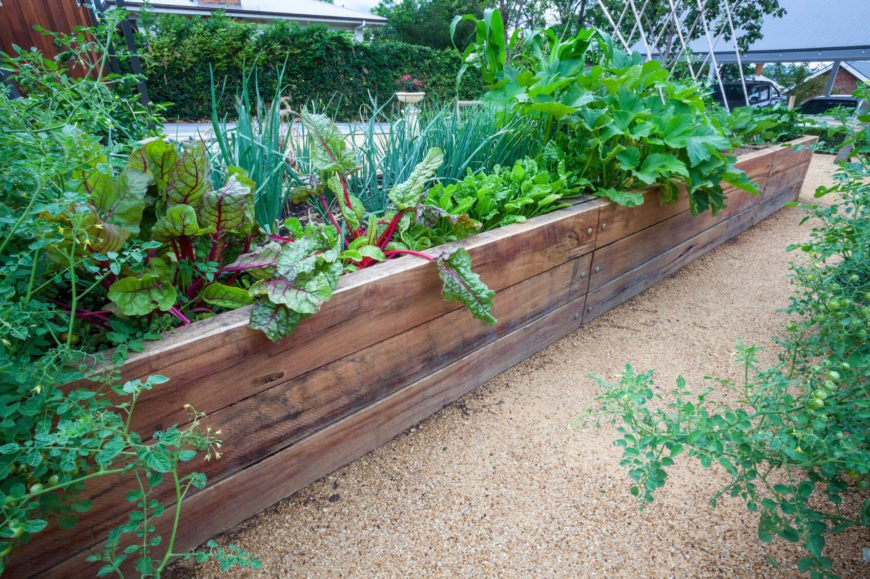 Here is a long, and sturdy wooden raised garden bed, perfect for the serious gardener. There are a wide variety of vegetables that would be well at home growing in this wonderful raised garden bed.