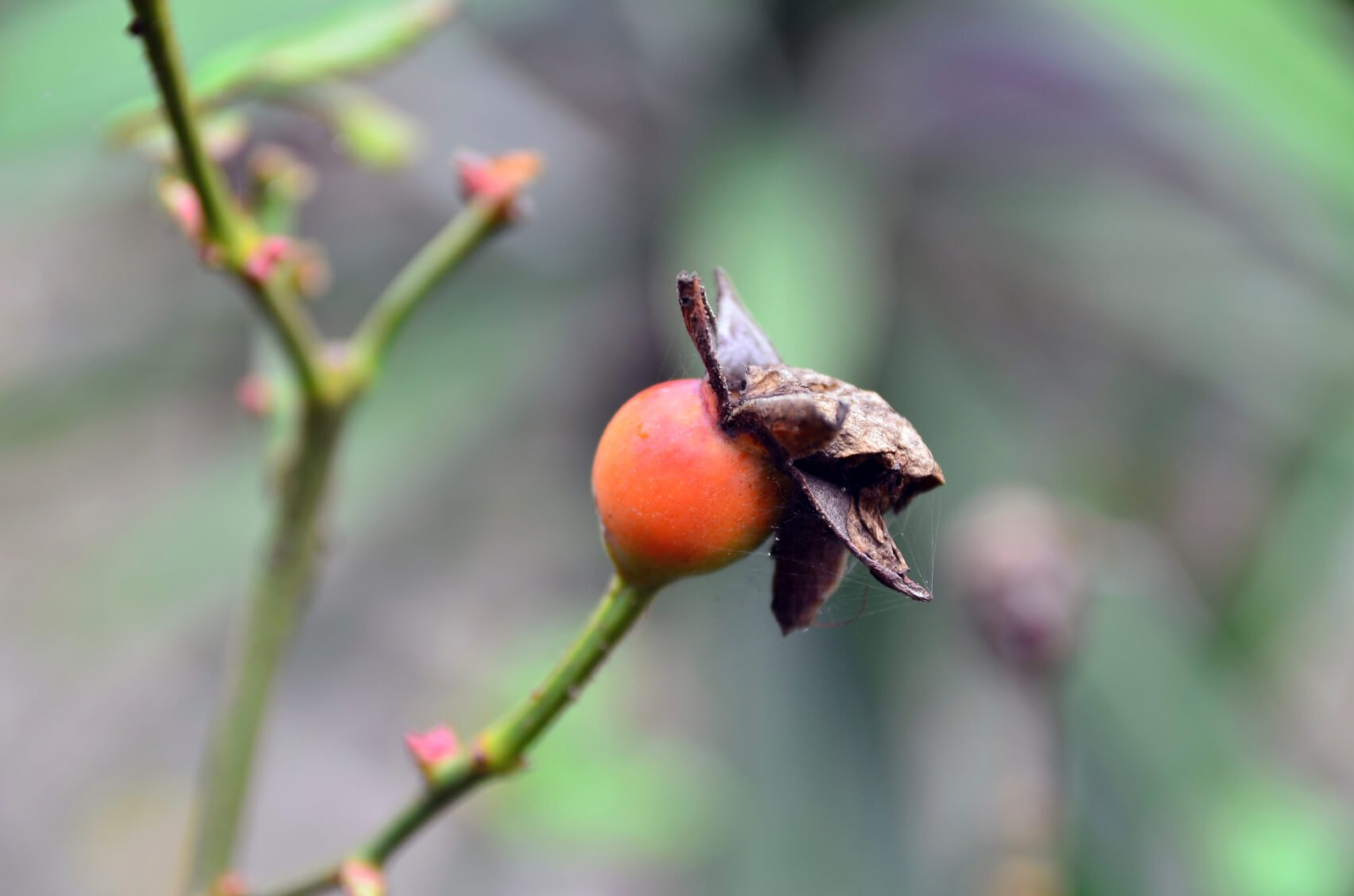 Perhaps explore growing wild roses and harvesting rose hips. These fruity morsels are great for making jam, and are packed with Vitamin C!