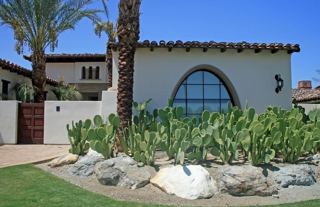 Some variety of cactus can get pretty tall, and if you plant enough of these kinds in your yard, you can have a cactus forest in your yard. It's like a privacy hedge with a bit more security.