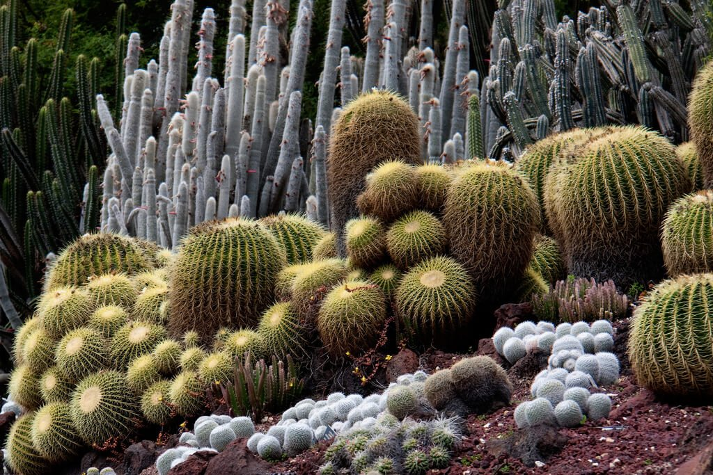 Larger cacti grow well on uneven surfaces, and along and uneven landscape can provide a wonderful aesthetic.