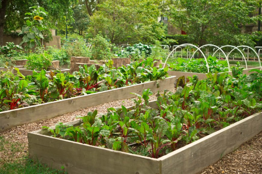 Here is a simple raised garden bed. This bed uses a single board on all sides to create the parameter. The unfinished look of the wood adds to a rugged and rustic look.