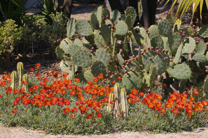 Some cacti have stunning flowers, and in vibrant colors as well. They may not be known for it, but they can have just as beautiful blooms as any other flower.
