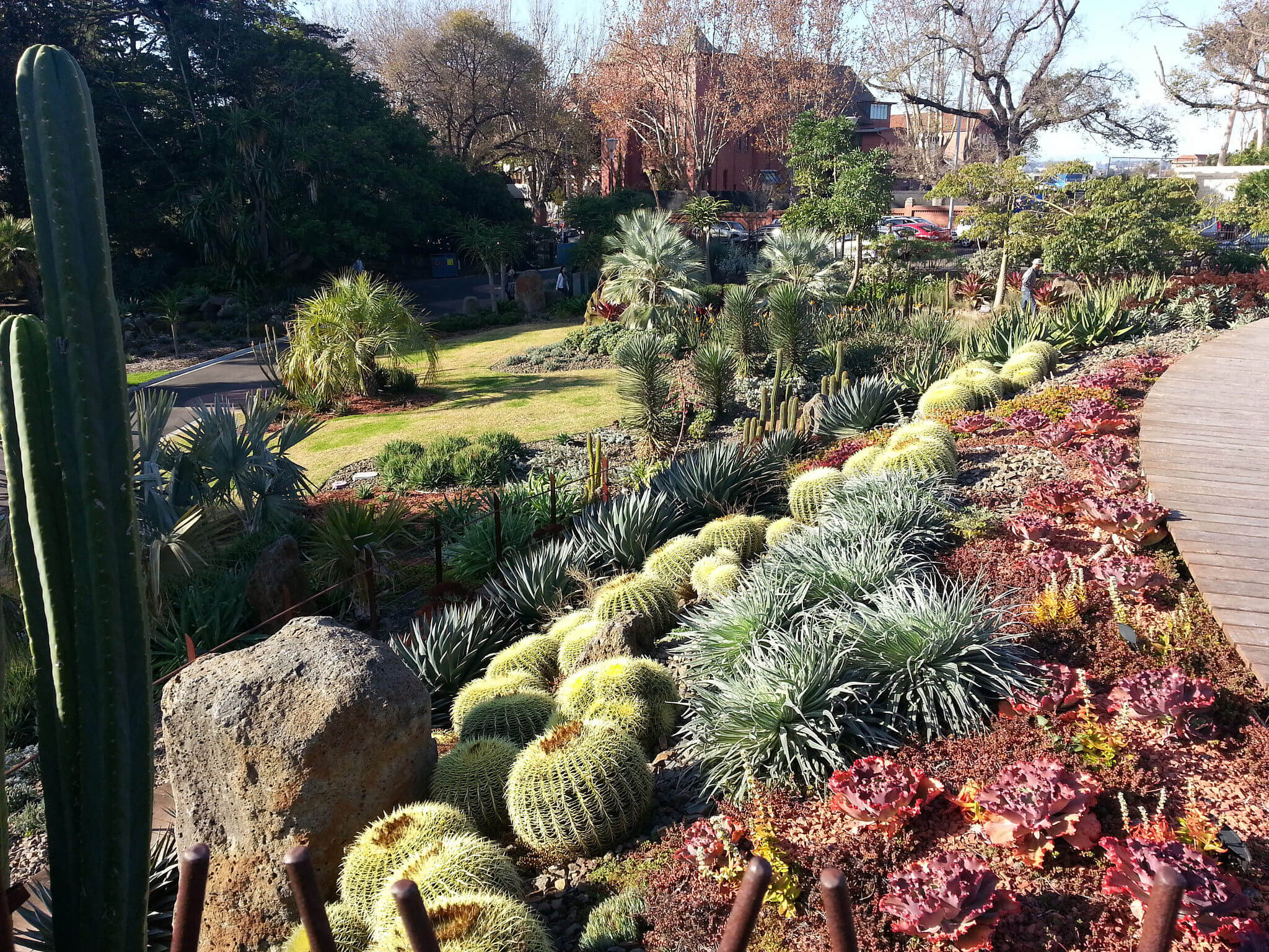 On a hillside, in rich red dirt, this combination of round and spiny cacti delivers a desert appeal, but still provide ample green to liven up the space.