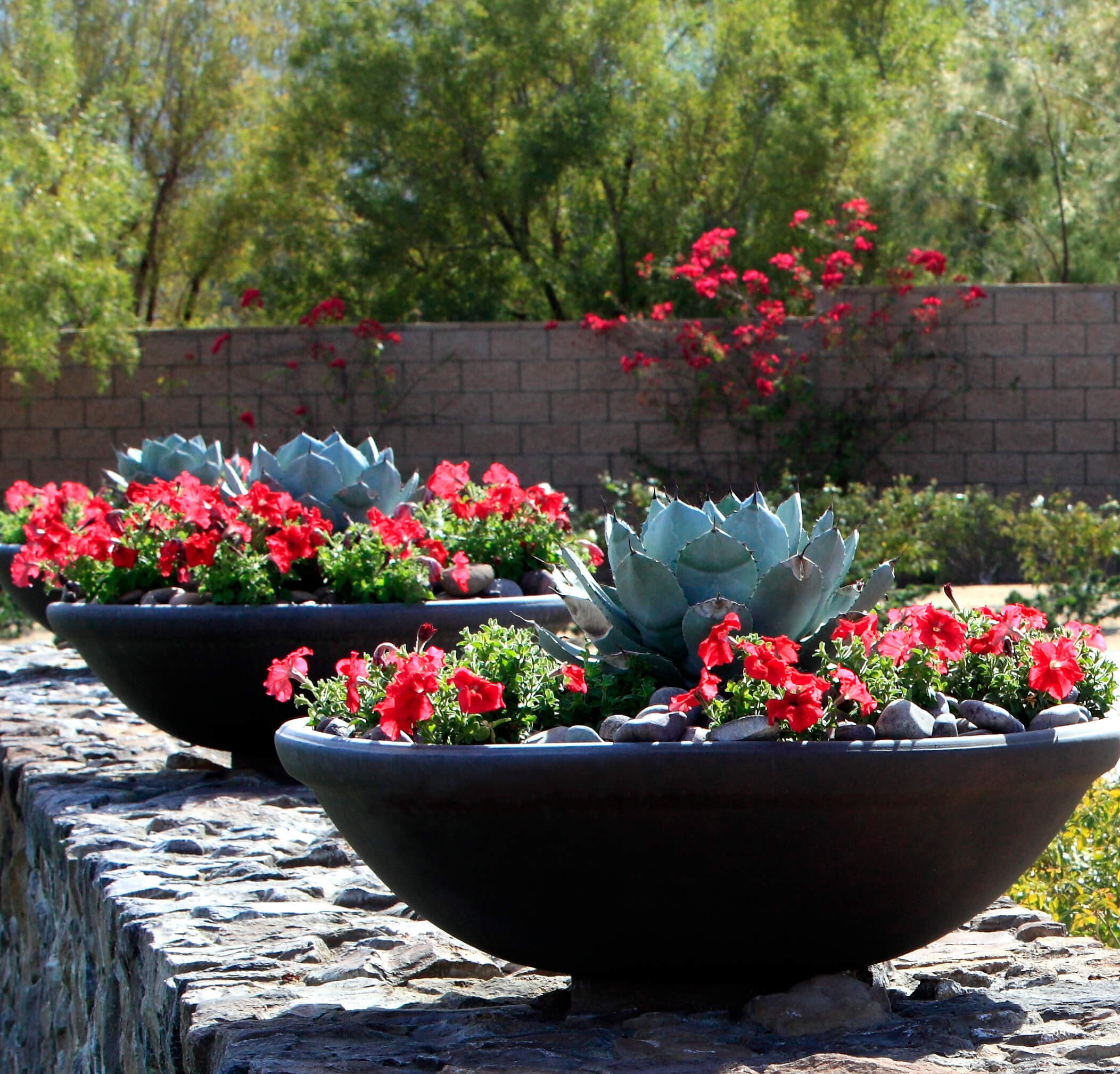 Some cacti have a nice blooming look that makes them amazing for a centerpiece of an arrangement. Even in standalone arrangements, cacti make for great companion plants for other flowers.