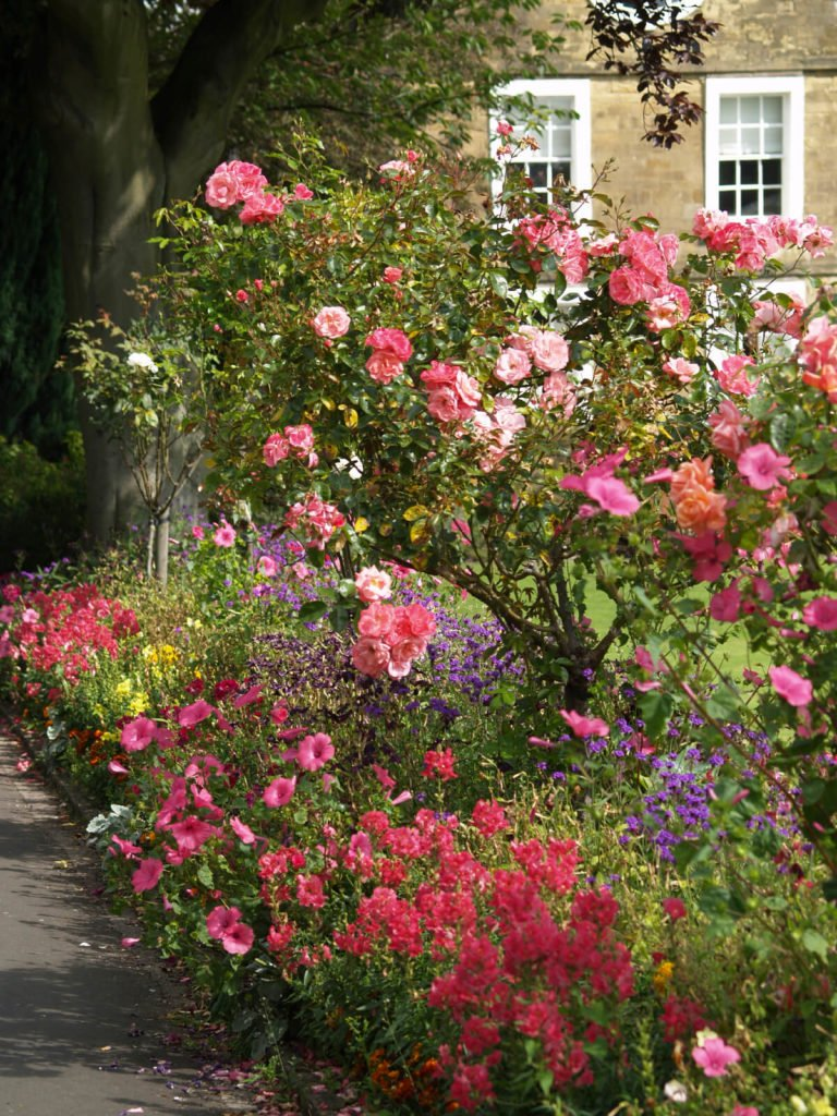 Planted rose trees are the perfect complement to this diverse English garden style border. Roses pair well with other water loving plants, so you can many different types of flowers when planting a border.