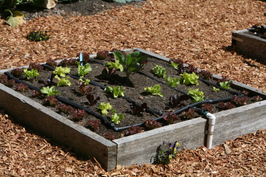 Here is a simple raised garden bed with an irrigation system in place. These kinds of accessories can be helpful with the labor involved in drawing vegetables, but can add to the cost of building your garden.