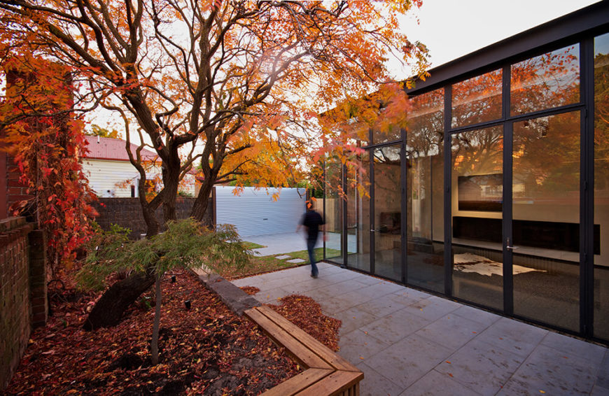 """Here's that """"Golden Rain"""" tree, visible from anywhere in the home addition, thanks to the full height glass walls. This close interaction with the outdoors was part of the design from the ground up."""