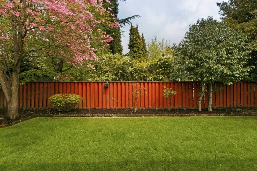 32 Brilliant Backyard Tree Ideas