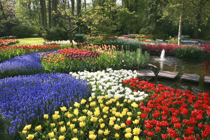 With proper planting you can create some interesting and exciting designs in your garden. By utilizing crisp lines in your garden your flowers will make a fantastically uniform and intentional look.