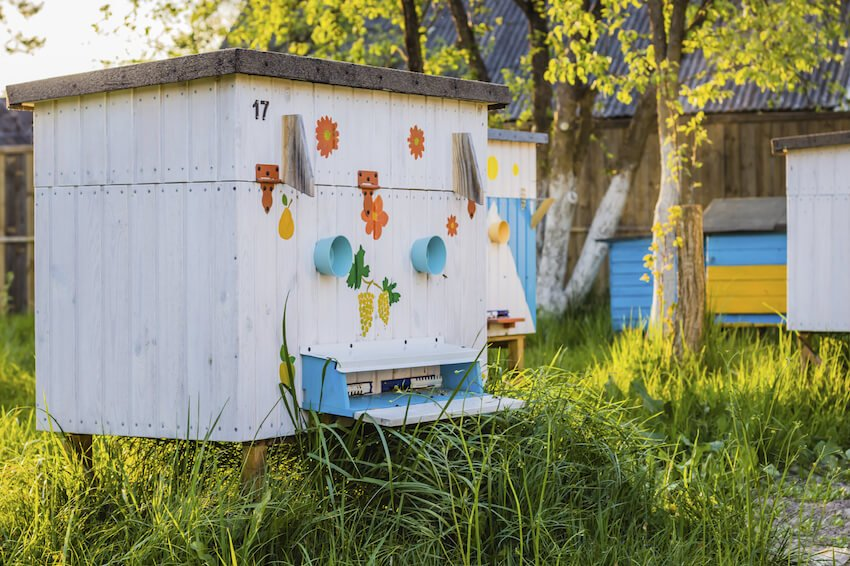 This apiary is probably one of the most unique on our list, with delicate painting details on its surface making for a playful presence in any yard. The construction features a large hinged top half for convenient access.