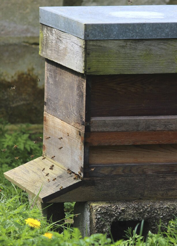 If you've got old but good condition wood panels lying around, a bee house like this would be relatively easy to complete. Set atop some cinder blocks, it'll keep a fresh, cool, and dry place for hives to flourish.