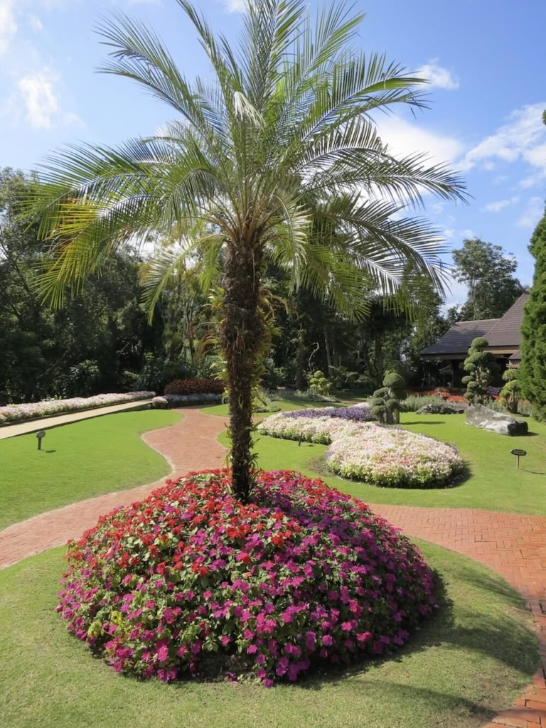 Here is a great palm tree situated as a central focus of a flower garden. Palm trees can make marvelous focuses for gardens. They have wonderful textures and an interesting look that draws lots of attention.