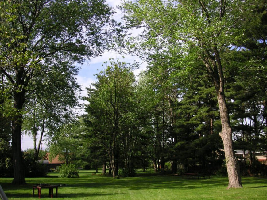 With a few well placed trees you can create a nearly full canopy that will give shade to your entire yard. This can make your outdoor time very pleasant during a warm summer.