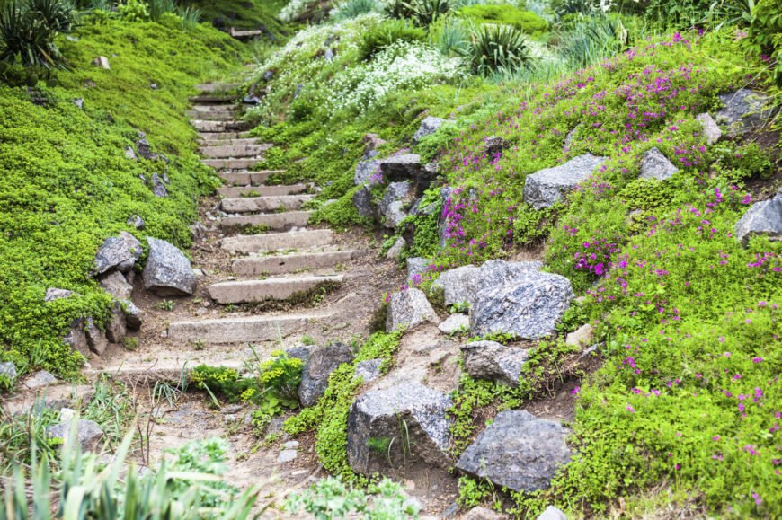If you let moss grow you may not even be able to see the stones. This picture shows rocks lining a stone stairway. The rocks are coated in moss nearly to the point of disappearing.