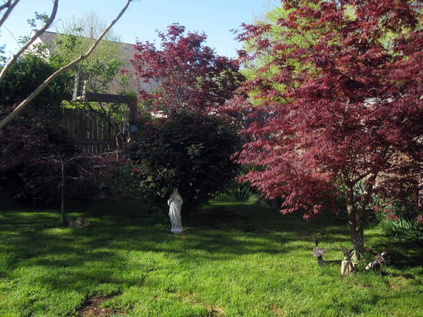 Some trees provide different colored leaves all year. This tree has darker red leaves, giving this space an interesting appeal that stands out from the surrounding greens.