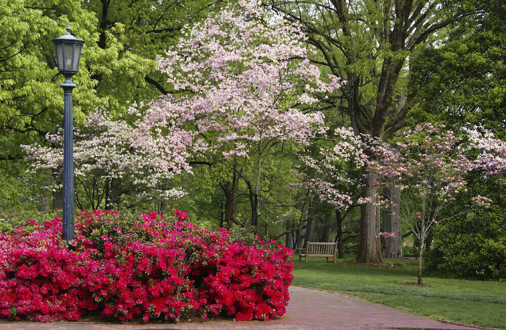 There are some variety of trees that have blossoms. Blossoms can really light up an area with color when they bloom. This is a spectacular way brighten up your yard.