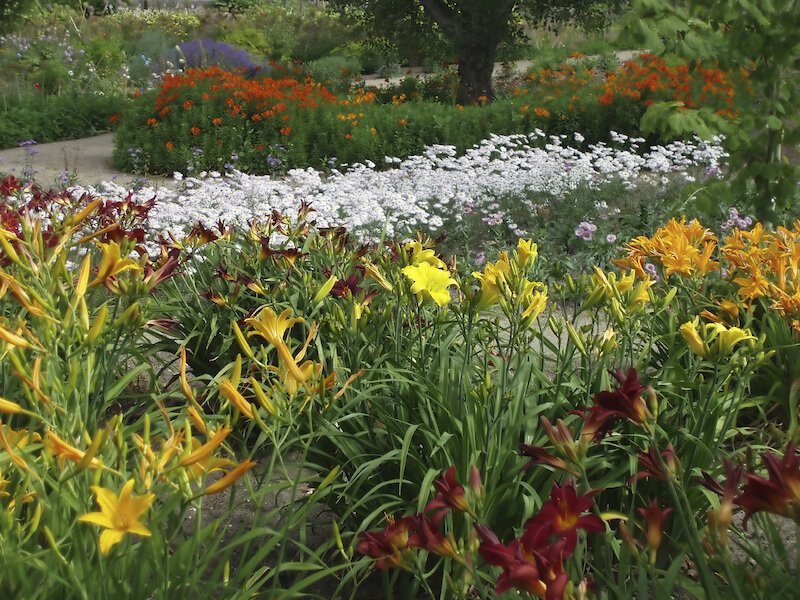 Perennial gardens can take on nearly any shape. A large bed of flowers is a traditional look for a perennial garden. Here the daylilies and snow in summer flowers are laid out in wide beds, making a blanket of color across this yard.