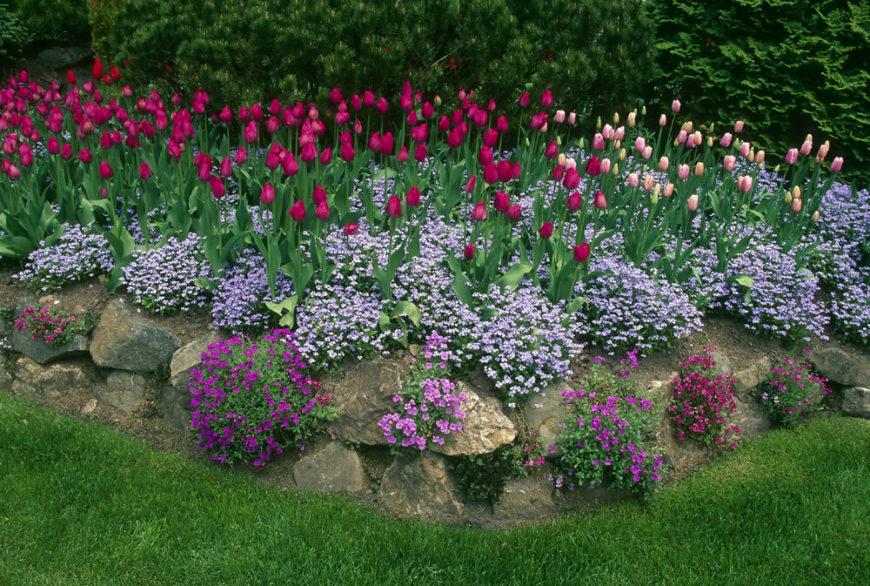 Even though perennials can lean toward a splendidly wild and untamed look, with some planning and effort you can create an organized garden that is sure to impress.