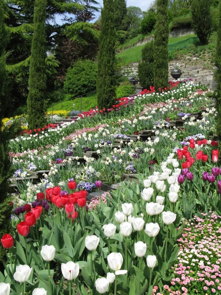Tulips are a classic choice that looks professional and can be arranged in patterns. They come in so many different colors that just by using tulips alone you can have a complicated and widespread color palette.