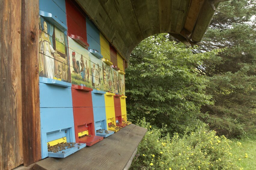 This design is a rather substantial beekeeping solution, with a lengthy overhang designed to protect the hives as well as the dry clothes of anyone attending them. The multicolored facade features fun paintings over each hive, with pull-out access for observation.