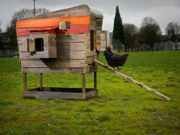 If you're looking for a dose of whimsy with your chicken coop, this model might be right up your alley. Shaped like a camper, it boasts a metal roof and brightly colored stripes, plus a variety of small access windows.