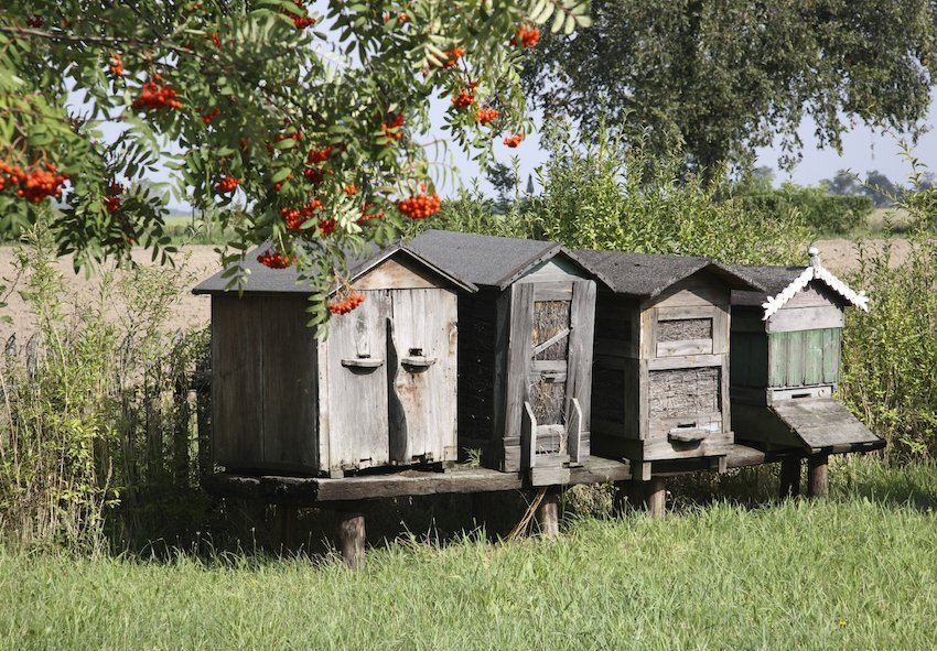 If you're into beekeeping and enjoy the charms of rustic design, this setup might be the solution for your backyard. Each home features a slightly different design, but each offers easy observation and a suitably tough roof for longevity.