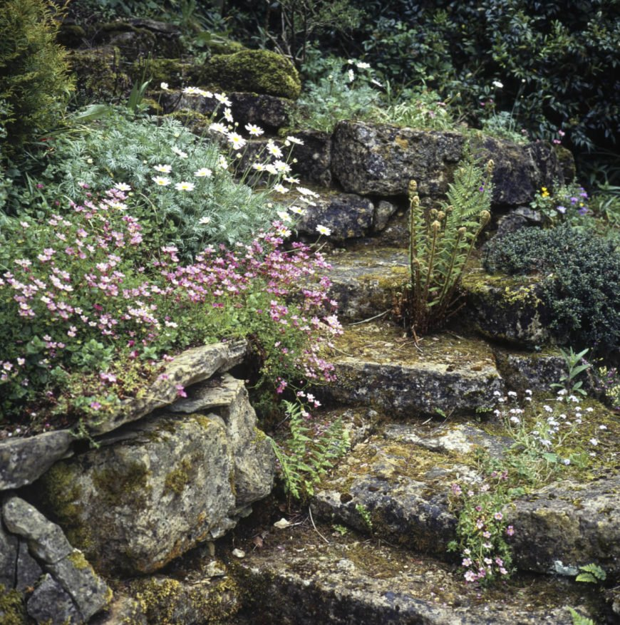 As your stone ages and grows moss it may pick up some other wild plants. This makes the area have an aged and distressed appeal.