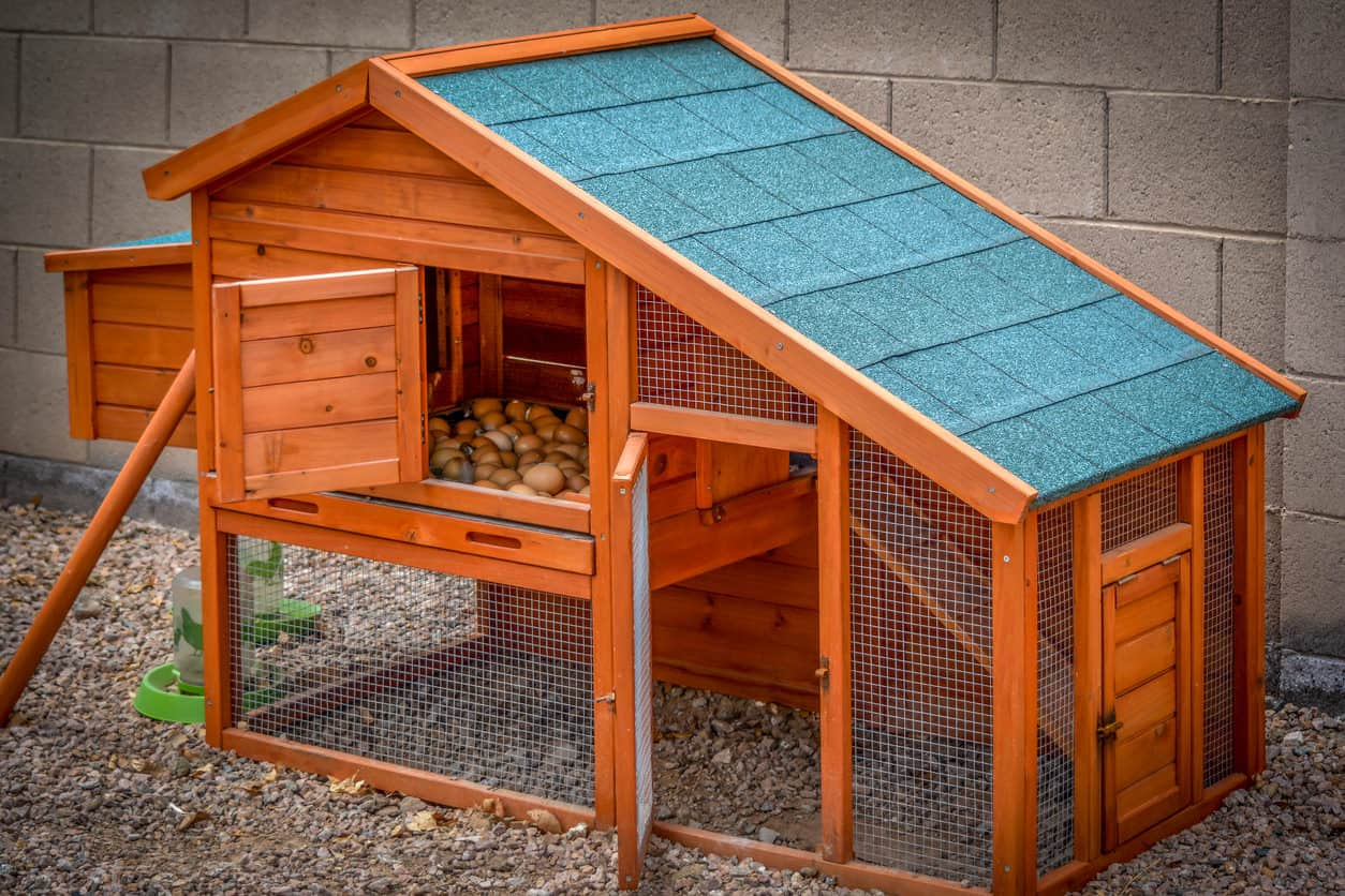 Small chicken coop with lower open area and upper egg-laying house.