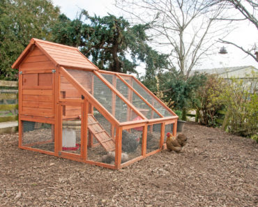 Spacious chicken coop with wired in free range area
