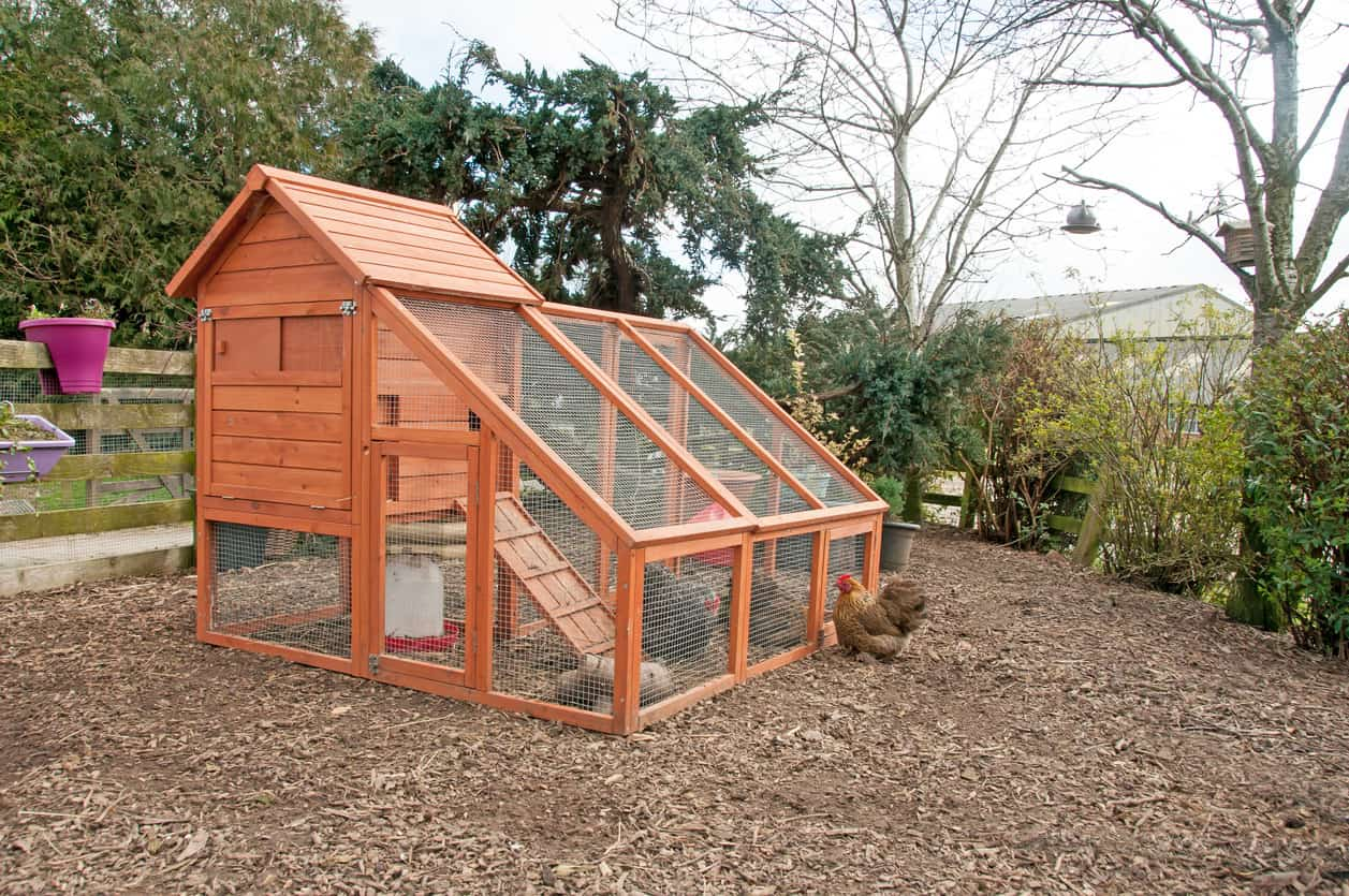 Chicken coop with housing area and meshed-in ranging area