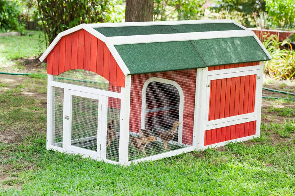 Tiny red and white doghouse style chicken coop that would fit in any backyard.