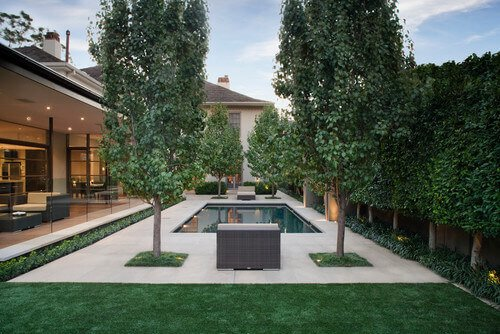 With smaller trees you can incorporate them into organized and neat landscaping. These trees all look very orderly. They are cultivated to stand at the corners of the pool to emphasize and add some depth to the design.