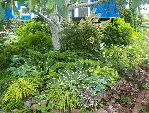 Many perennials have leaves that are differing shades and shapes. This is useful, as once the blooming season has ended you can still have a contrasting and visually interesting garden.