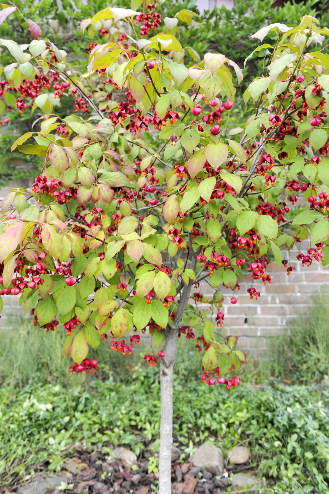 Here is a berry bush that provides this space with lovely color. Berry bushes can really bring an interesting contrast and texture to your garden, all while producing tasty berries.