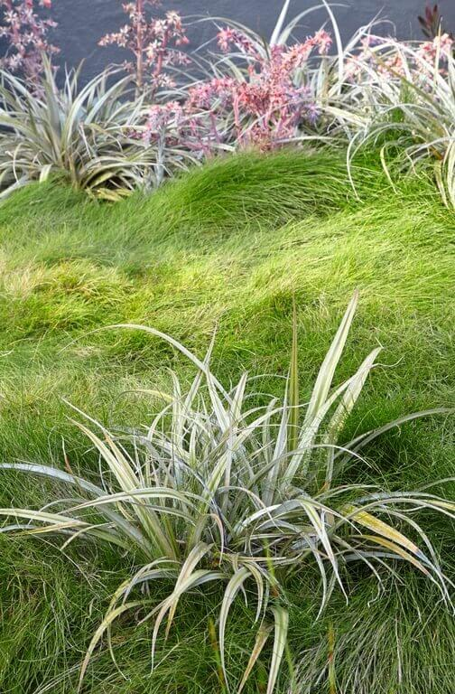 Sometimes letting grass grow out can be part of an intentional style. This overgrown lawn is great for covering and flowing with this uneven surface. It blends well with the plants chosen for the garden.