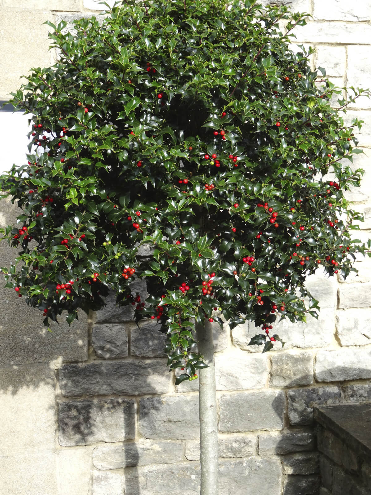 The leaves and texture on berry bushes vary. Some have soft colors and rough textures while others have deep rich colors and smooth and waxy textures. The look of the plant as well as the kind of berry are things to consider when choosing a berry bush.