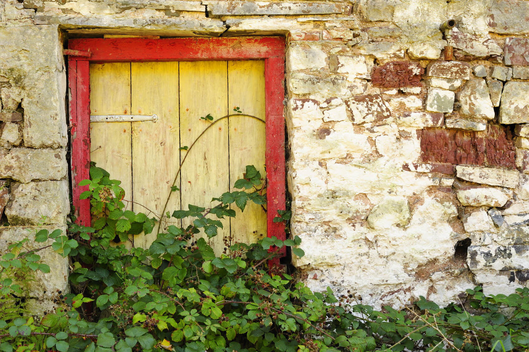 If you let berry bushes and vines grow wild against aged and rugged stonework you can have an amazing berry patch with a rustic and old fashioned feel.