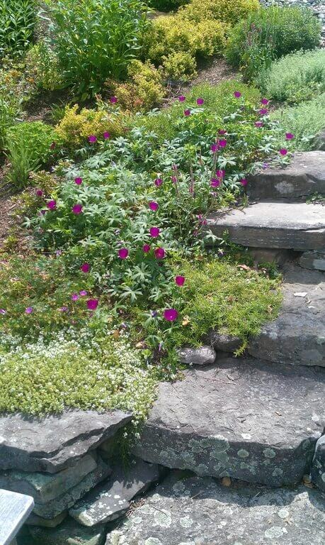Creeping vines and flowers are the best kinds of plants to build a wild look into your stone steps.