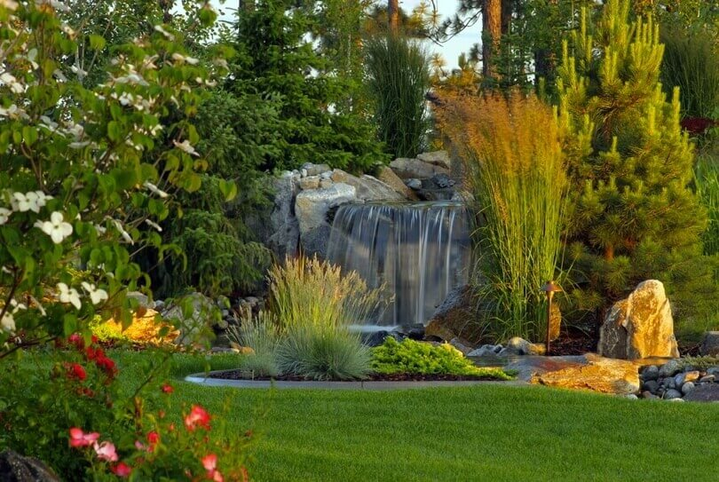 This grass has a deep and rich color that makes a wonderful backdrop for the features and colors of the other plants. A lawn like this is a great way to build a backdrop for your landscaping and garden.