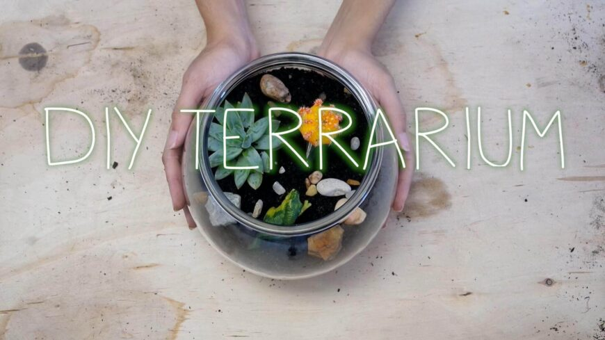 Terrariums are a great green addition to any living room, and they are fairly easy to take care of, so even if you don't have a green thumb, a terrarium is a great choice. This tutorial will help you design and create your own unique terrarium. This is a great project to do with friends or with kids too!
