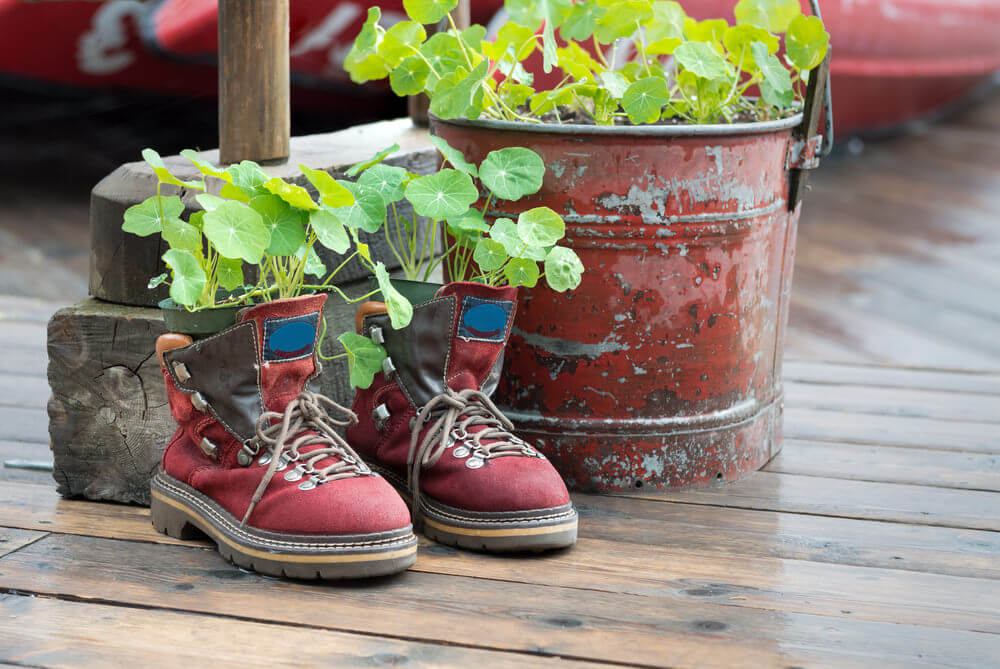 Check how these vining plants look even more at home in this worn out pair of red sneakers. These old sneaks still manage to look so dignified and hip with those dirtied laces even as planters.