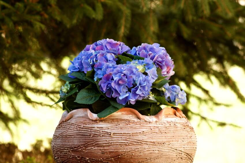 Design your very own flower ice cream bowl arrangement using hydrangeas just like the one below. This will allow you to provide more emphasis to the flowers and remind you of summer time since it looks like an ice cream bowl.
