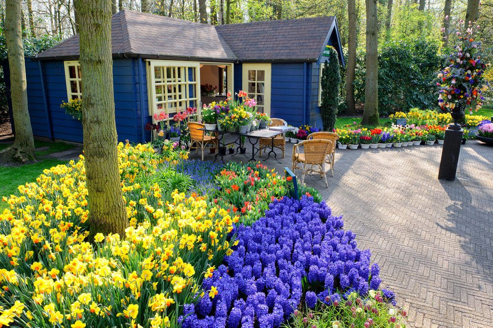 Looking at this view feels like living in a flower paradise. A variety of colorful blossoms like hyacinth, lirio or lily, yellow daffodils and other spring flowers complete this floral view.