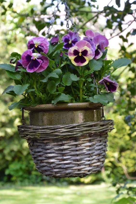 Hanging wicker basket with ceramic pot inside holding leafy and purple flowers.