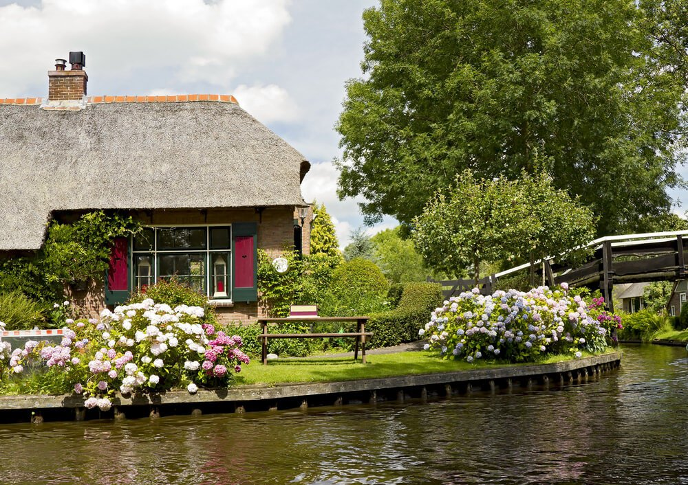 Hydrangeas growing along a canal.