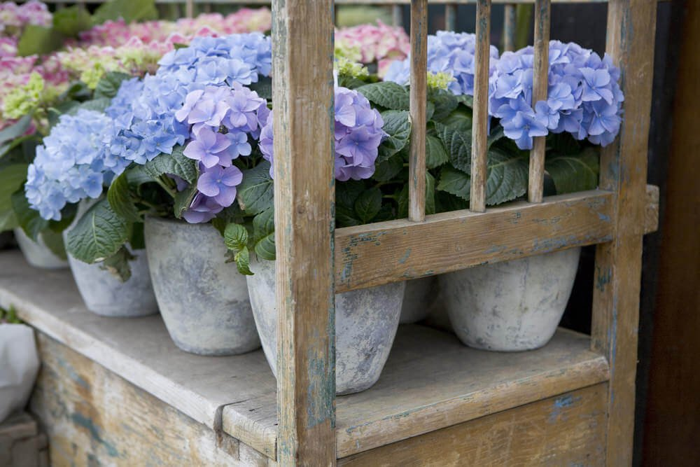 Since marble vases look like a blend of greys and whites, it fits perfectly with hydrangeas. Arrange them based on their color blends to add more flavor to it!