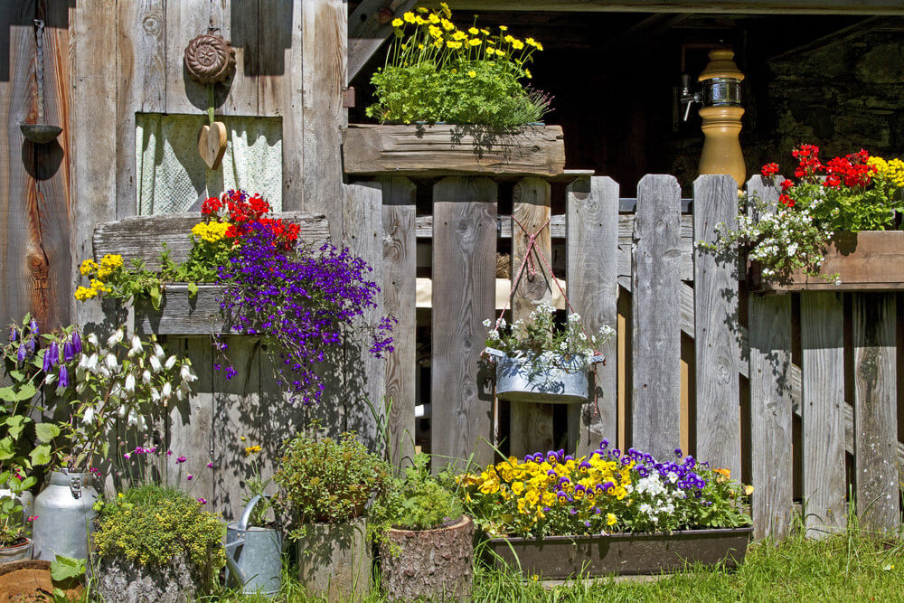 Rustic farm fence and outbuilding surrounded with rustic wooden flower boxes filled with a variety of flowers and flower colours including yellow, purple, white and red.